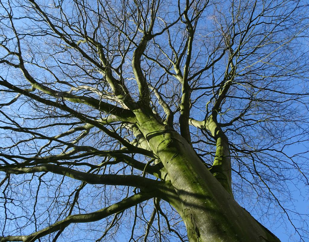looking up by gijsje