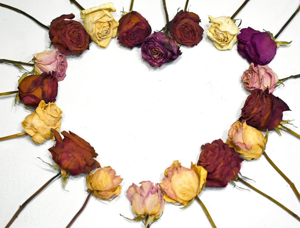 Rose Heart by homeschoolmom