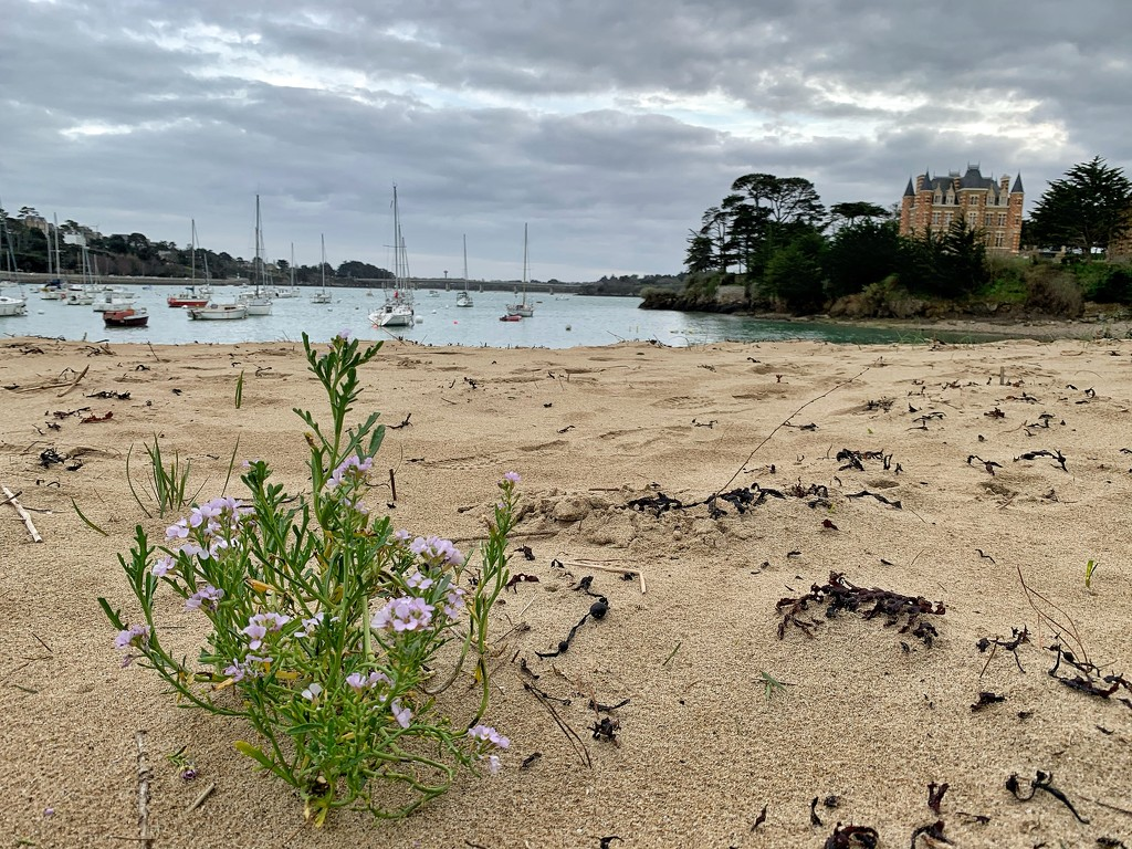 Flowers on the beach.  by cocobella