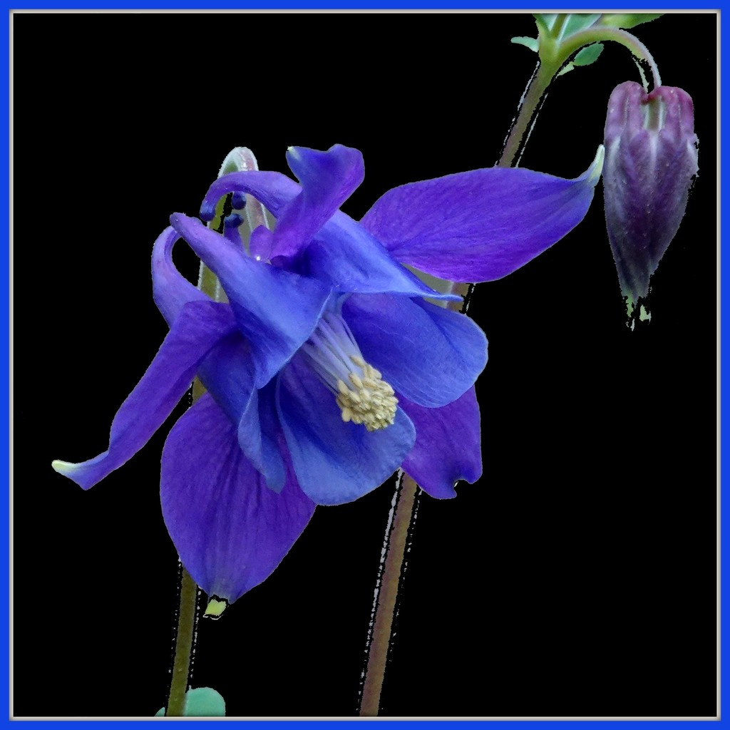 Definitely Blue by milaniet