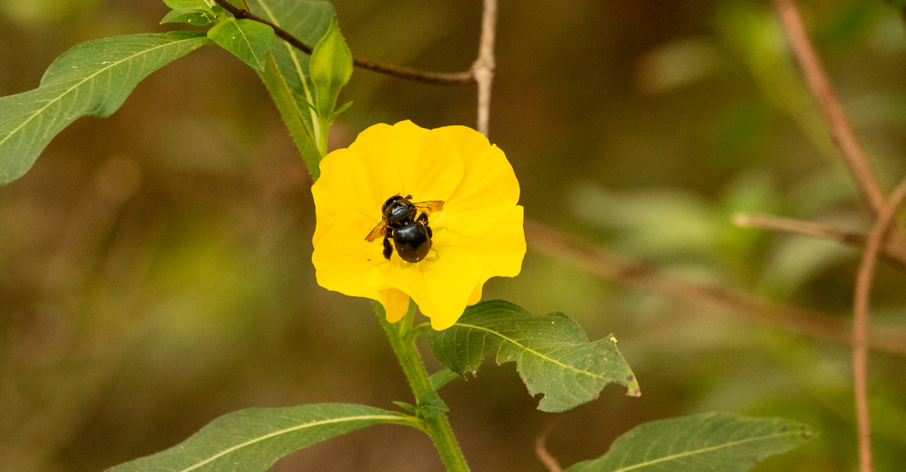 Bee and Flower! by rickster549
