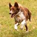 Frisbee Dog!