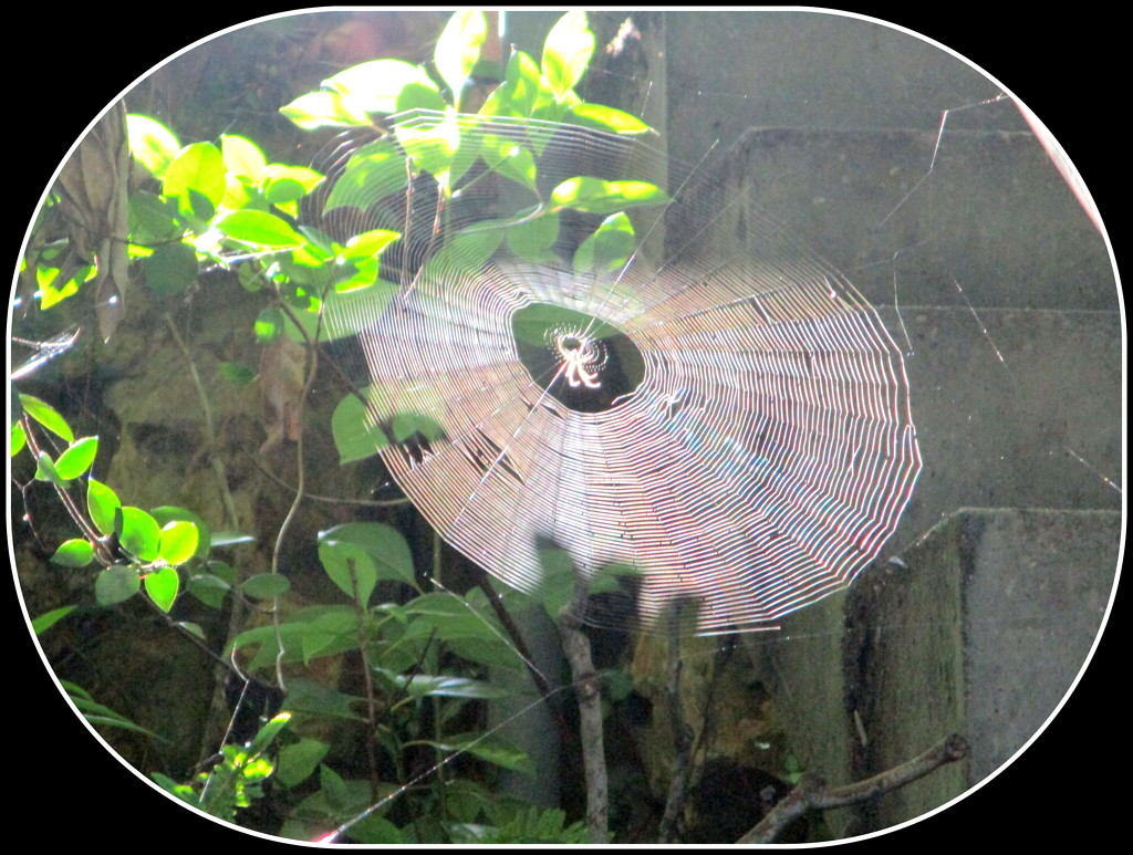 An amazing spider in the middle of his web by 777margo