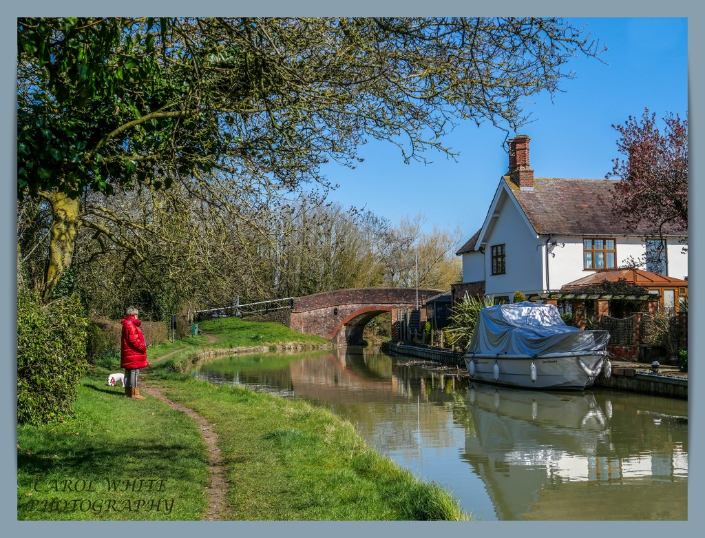 Rosie And Daisy By The Canal by carolmw