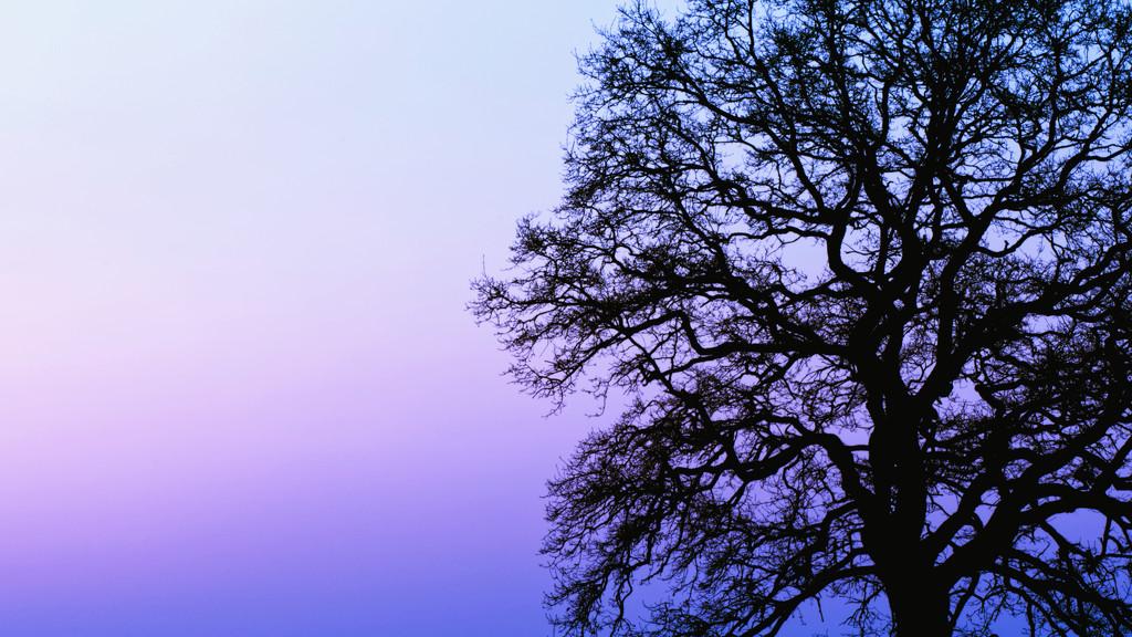 Blue hour silhouette by moonbi