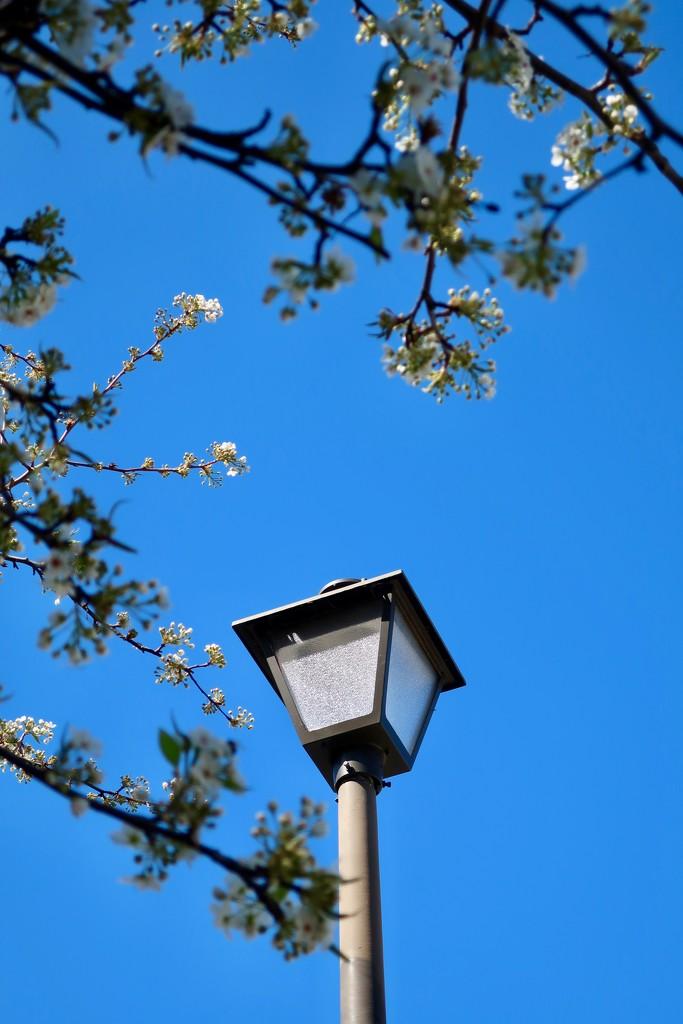 Blue skies!  by louannwarren