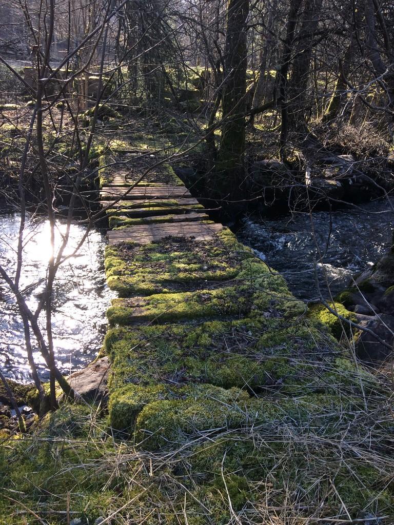 Lifes path by huvesaker