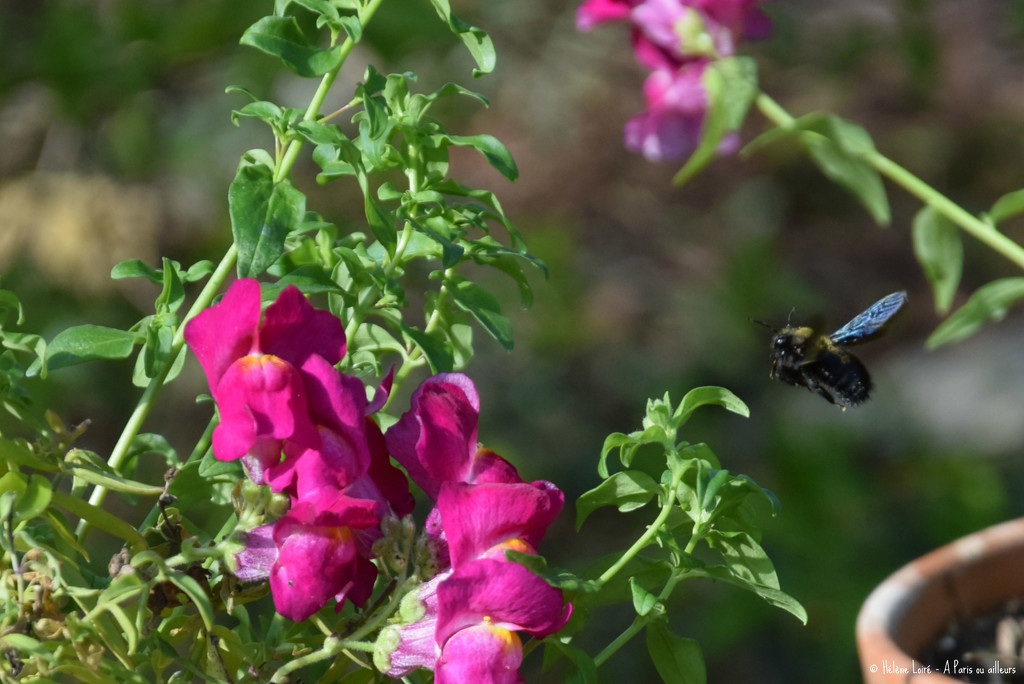 big bee by parisouailleurs