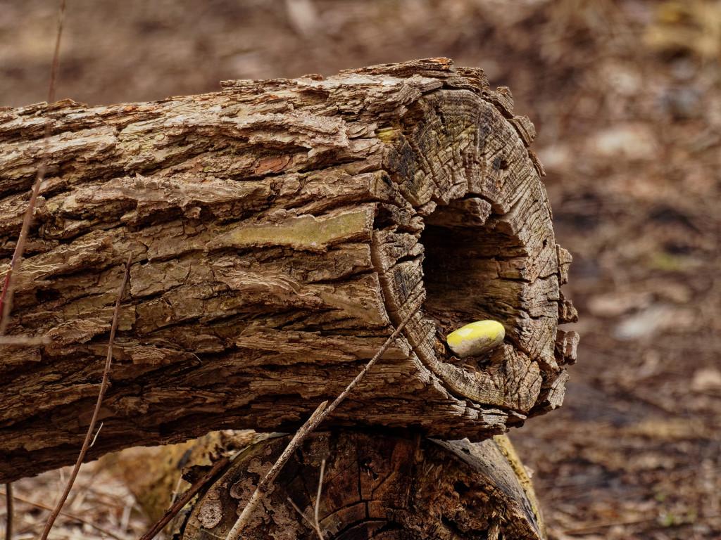hiding rocks by rminer