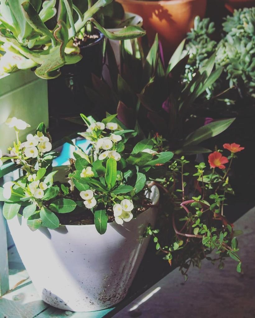 I miss my garden by motherxmind
