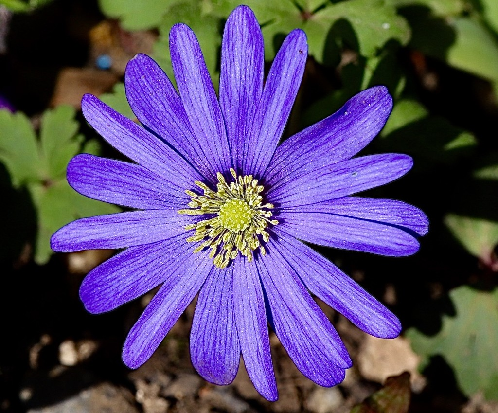Purple by carole_sandford