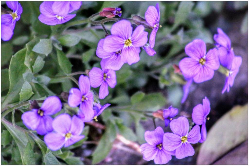 Purple for my rainbow! by lyndamcg
