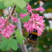 Would you beeleeve it - this bee landed just as I pressed the shutter!