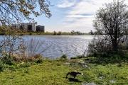 21st Mar 2020 - Wetlands goose