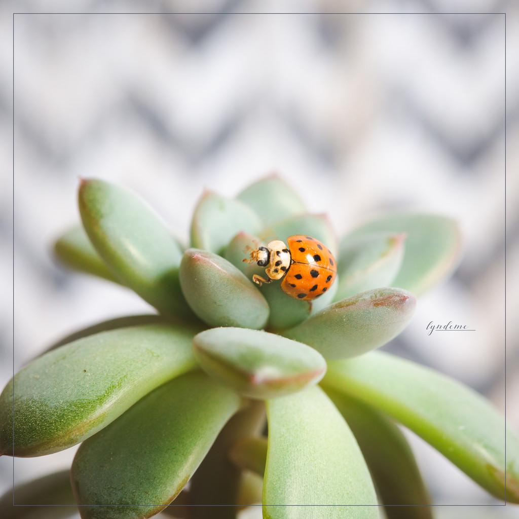 Spring Bug by lyndemc