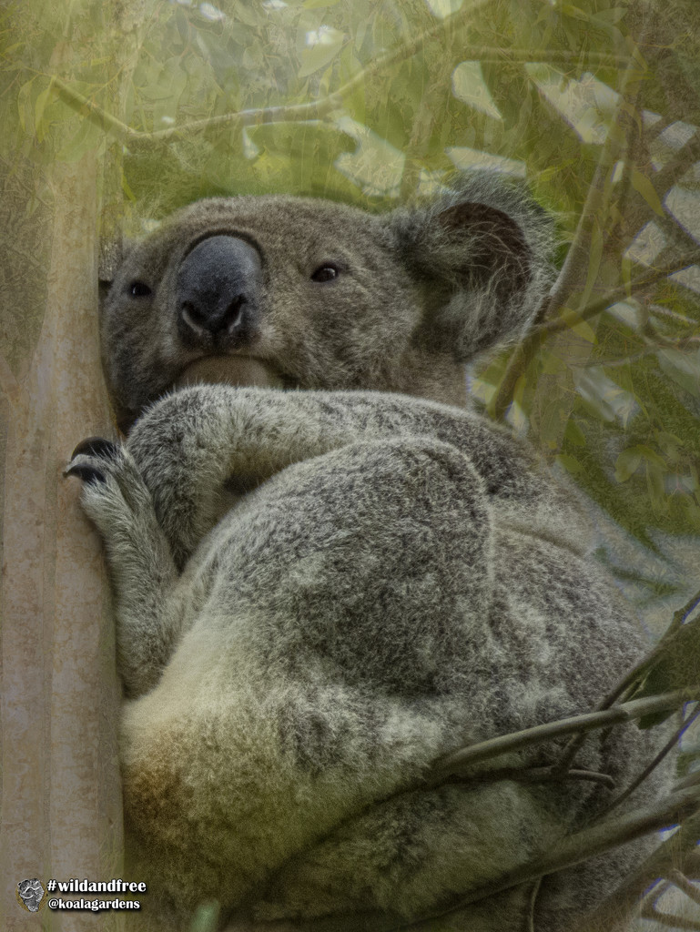 up in the canopy by koalagardens