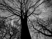 28th Mar 2020 - B&W tree