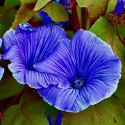 28th Mar 2020 - Tweaked Flowers _DSC9334