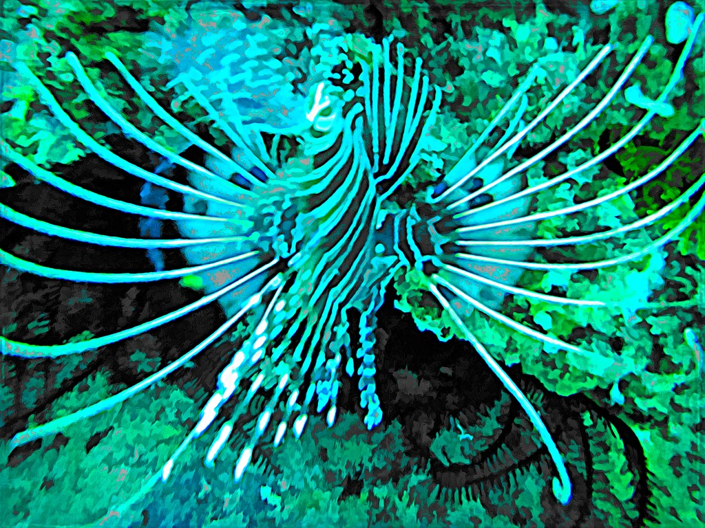 Lion fish 2 by pusspup