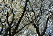 29th Mar 2020 - Looking up