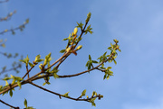 28th Mar 2020 - My Tree Branches
