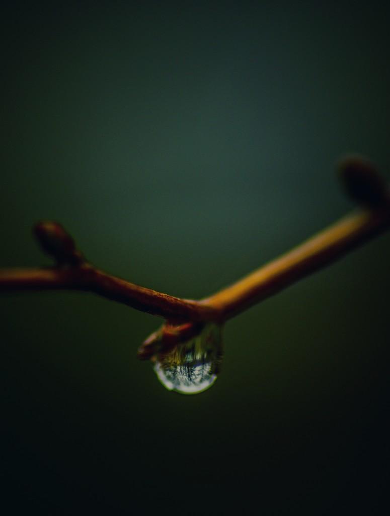 Let it Rain  by mzzhope