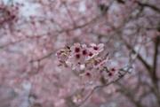 29th Mar 2020 - Blossom
