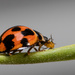 Who doesn't like a ladybird ... by glendamg