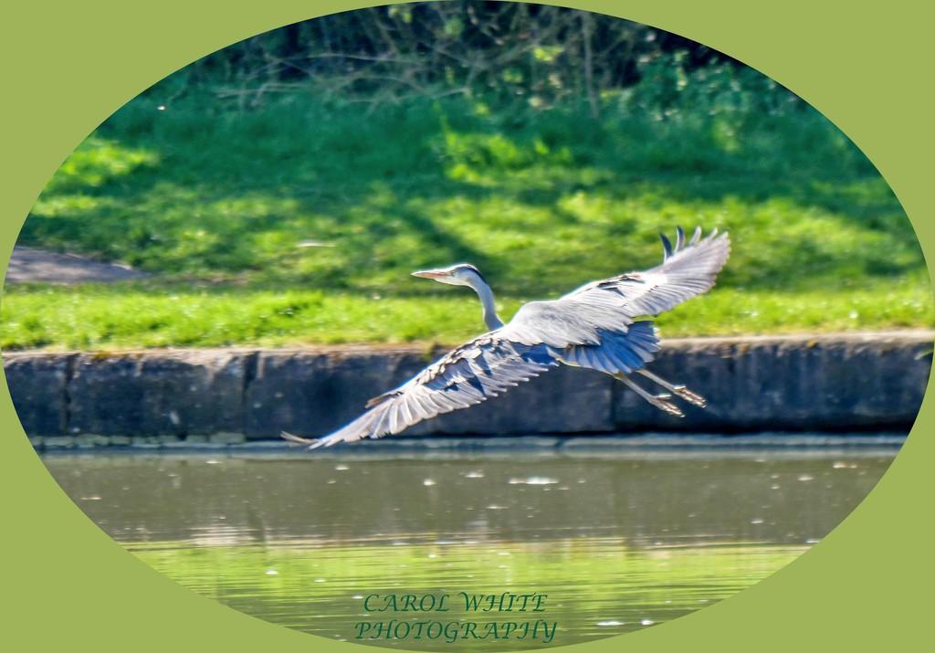 Flying Away by carolmw