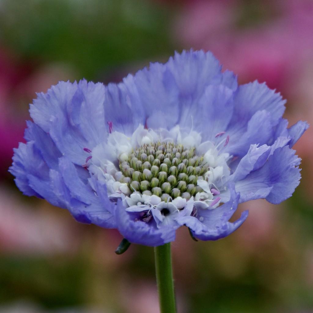 Another Unknown Flower DSC_7316 by merrelyn