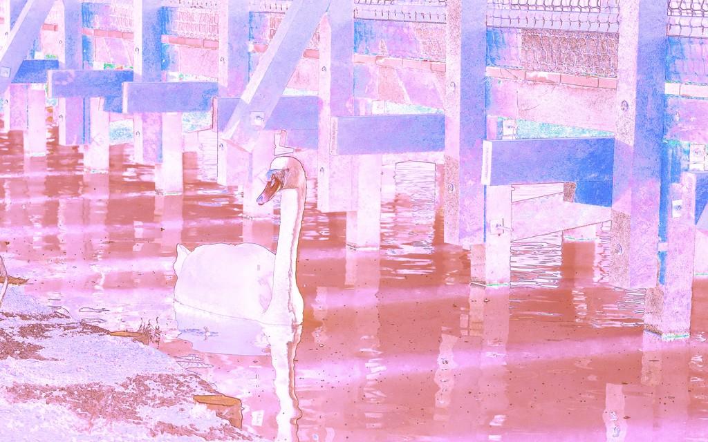 Swan by moonbi