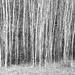 Skinny Trees