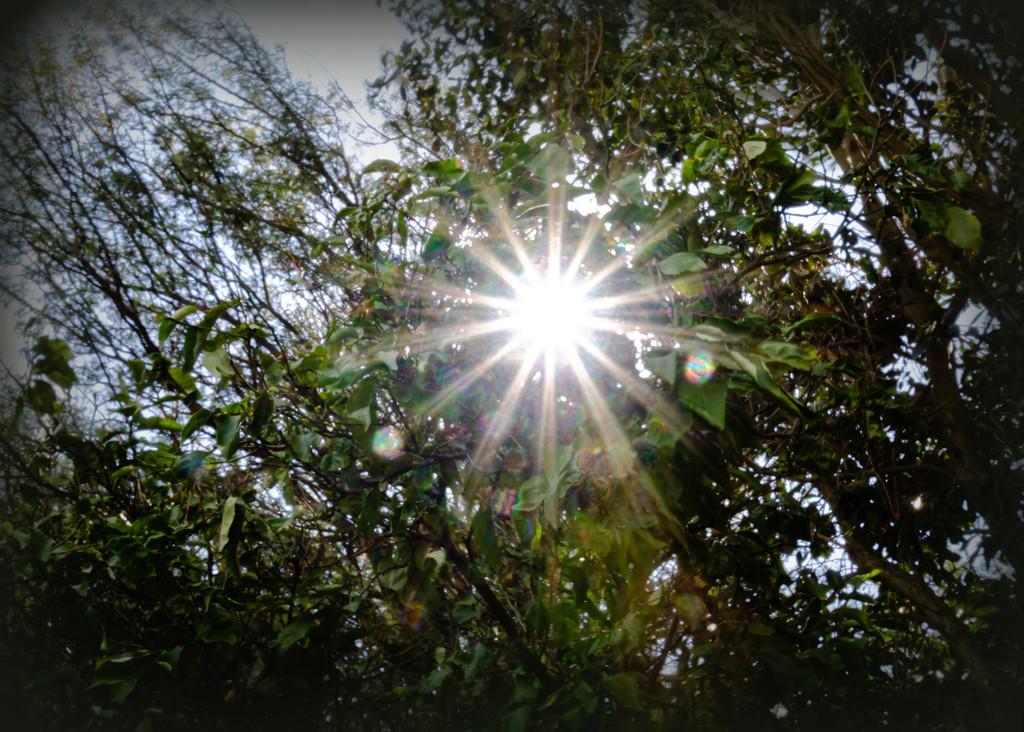 Sunflare by salza