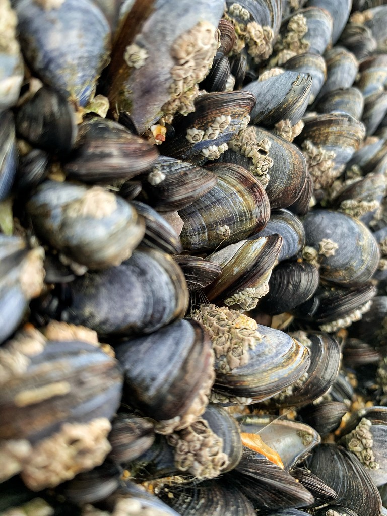 Mussels.  by cocobella