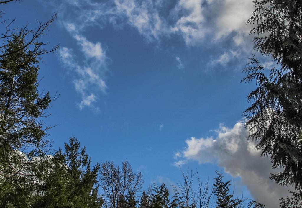 Blue Skies by vickiem