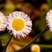 Tiny Flowers!