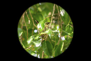 29th Mar 2020 - I Spy with My Little Eye...