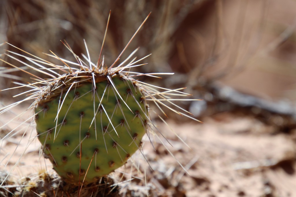 Prickly 29 by edorreandresen