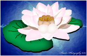 30th Mar 2020 - Water Lily (painting)