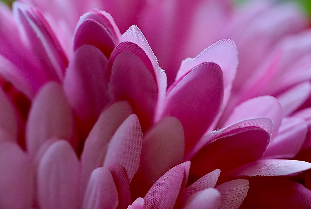 Pink 5 by carole_sandford