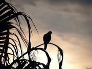 30th Mar 2020 - Dove silhouette