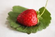 30th Mar 2020 - Strawberry