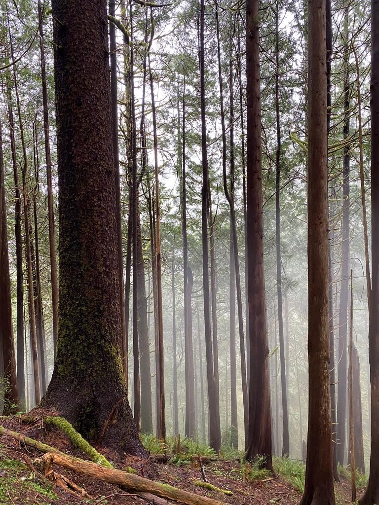 Fog by jgpittenger