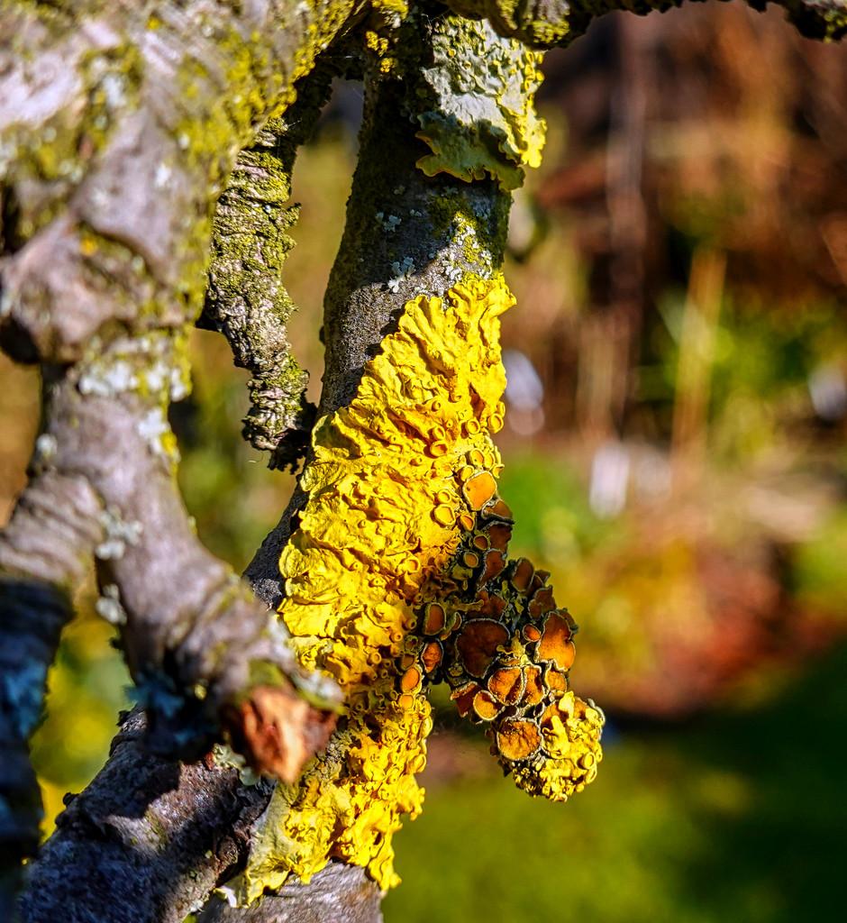 Lichen by tonygig