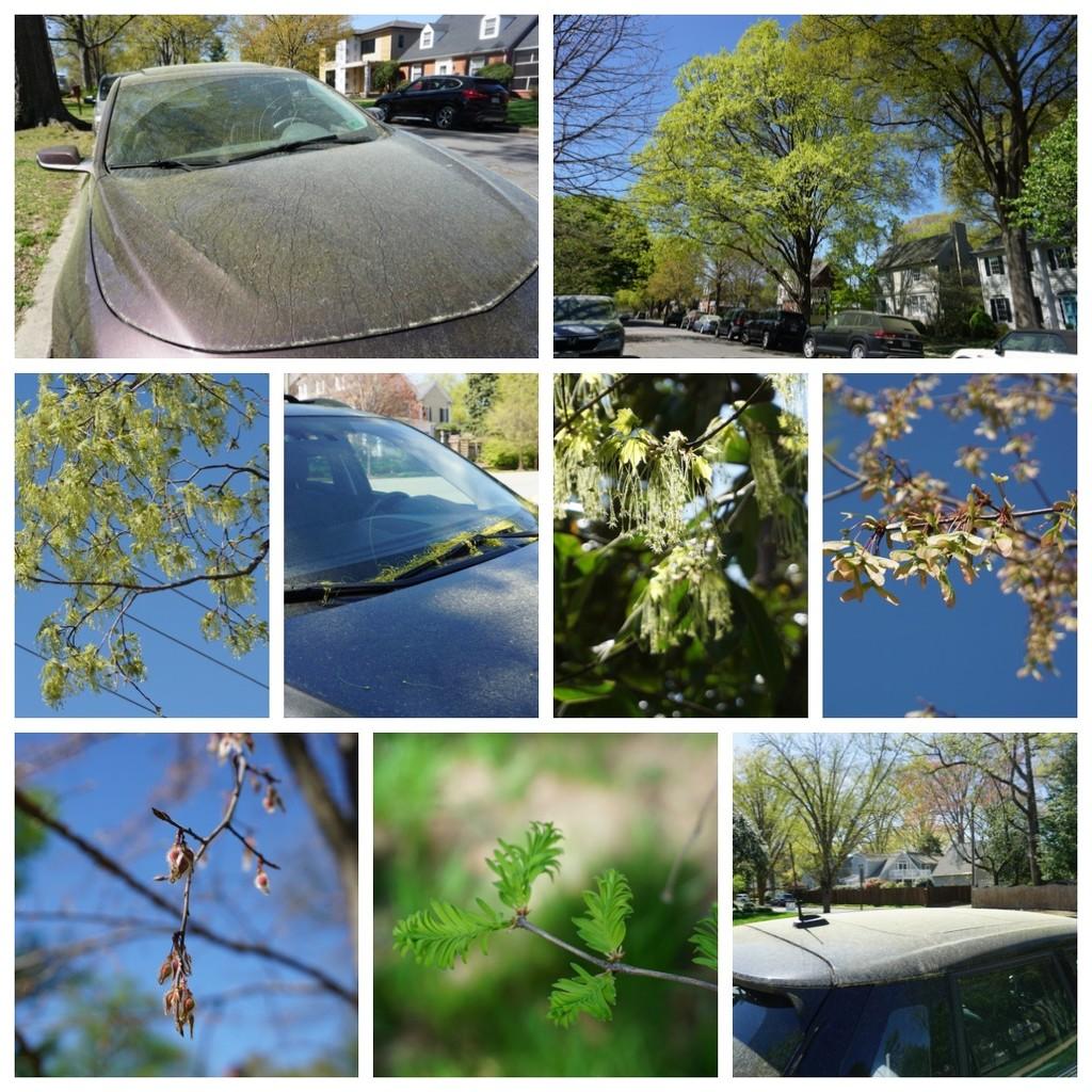 Pollen Season in Richmond by allie912