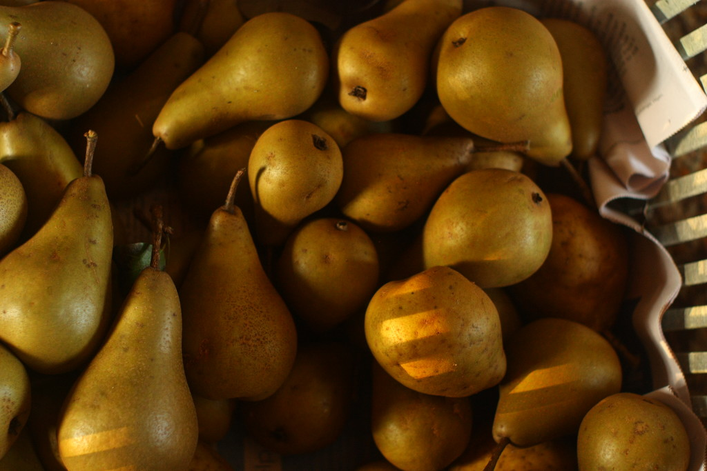 pears by kali66