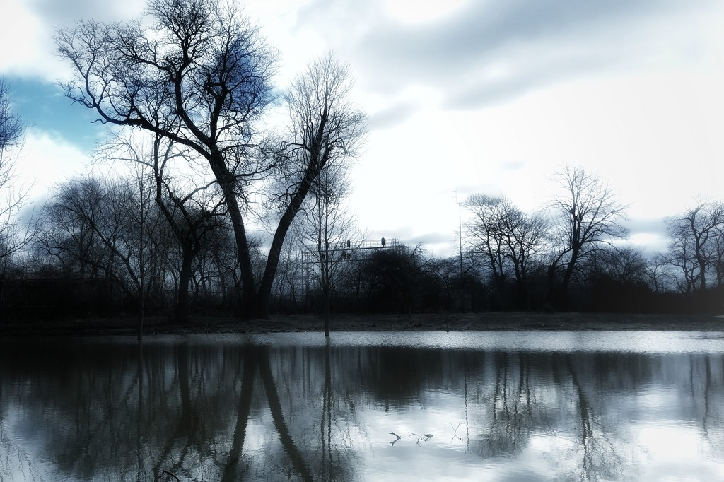 Urban Swamp...safe distance walking Finn! by ukandie1