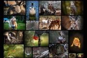 28th Mar 2020 - Animals everywhere