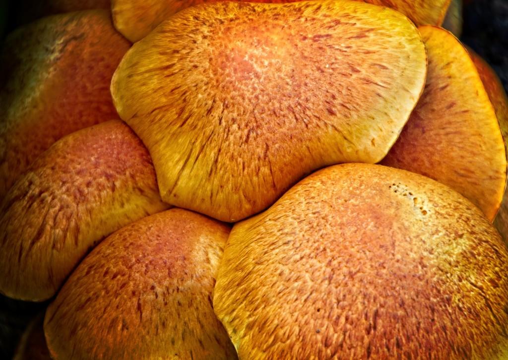 Orange fungus by kiwinanna