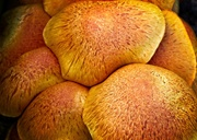 31st Mar 2020 - Orange fungus
